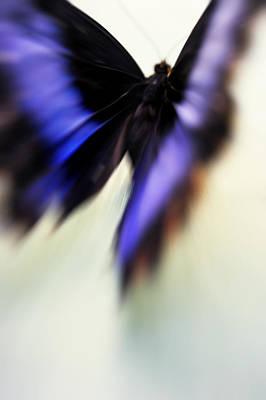 Photograph - Soul Flight. Impressionism by Jenny Rainbow