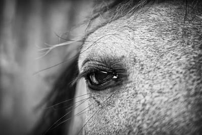 Photograph - Soulful Horse Eye by Priya Ghose