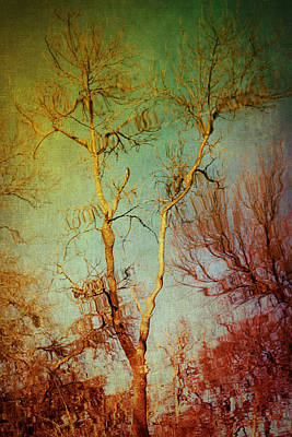 Souls Of Trees Art Print by Trish Mistric