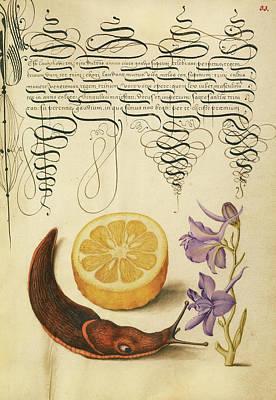 Terrestrial Painting - Sour Orange, Terrestrial Mollusk, And Larkspur Joris by Litz Collection