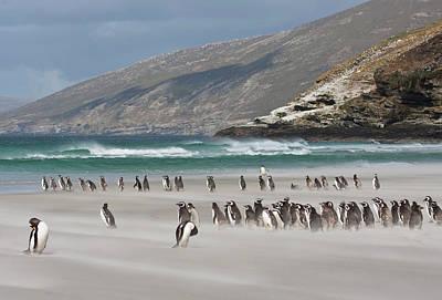 South Atlantic, Falkland Islands Print by Jaynes Gallery