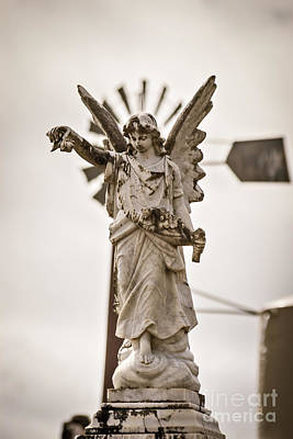 Photograph - South Australian Angel by Colin and Linda McKie