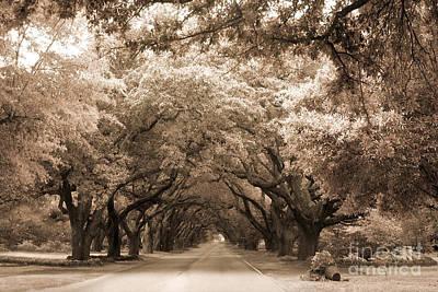 South Carolina Sepia Oak Trees Nature Landscape Art Print by Kathy Fornal