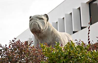 South Carolina State University Bulldog Art Print by Bob Pardue