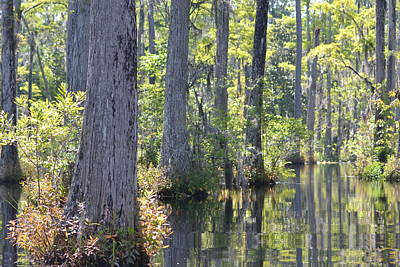 Photograph - South Carolina Swamp by Michael Colgate