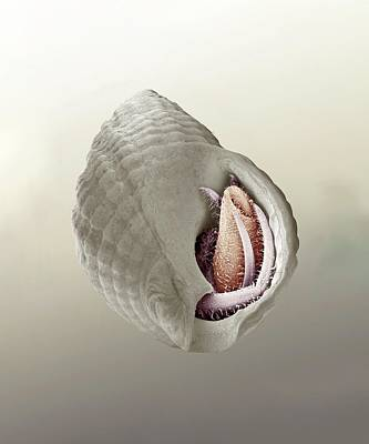 Hermit Crab Photograph - South-claw Hermit Crab by Petr Jan Juracka