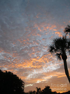 Photograph - South Florida Sunrise by Oksana Semenchenko