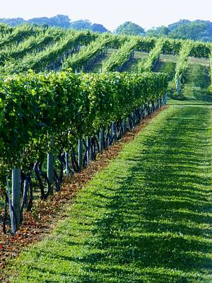 Photograph - South Fork Vineyard by John Wartman