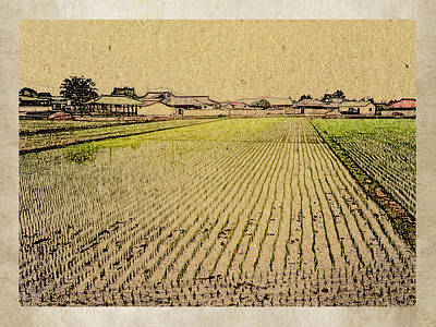 Photograph - South Korea Rice Paddy by Dennis Buckman