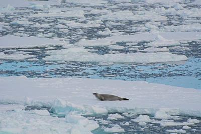 Antarctic Peninsula Photograph - South Of The Antarctic Circle by Inger Hogstrom