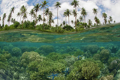 Sea And Sky Photograph - South Pacific, Solomon Islands by Jaynes Gallery