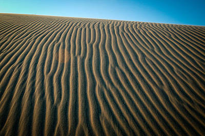Photograph - South Padre Island Dunes II by Randy Green