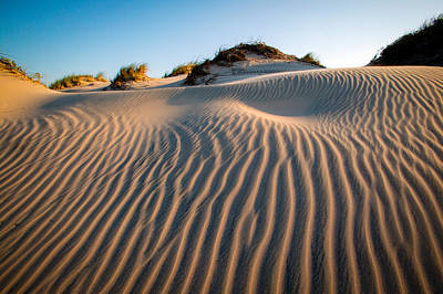 Photograph - South Padre Island Dunes by Randy Green