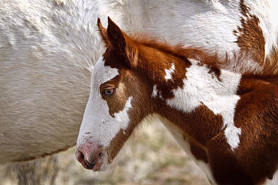 Forelock Photograph - South Steens Baby D9687 by Wes and Dotty Weber
