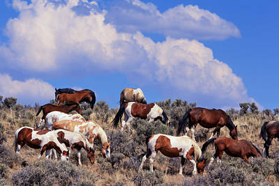 Red Dun Horse Photograph - South Steens Feral Horses by Kathleen Bishop