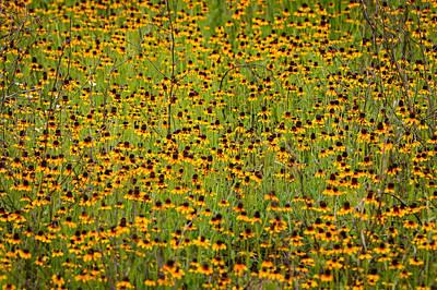 Photograph - South Texas Mosaic II by Randy Green