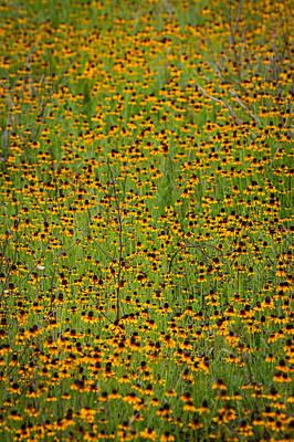 Photograph - South Texas Mosiac by Randy Green