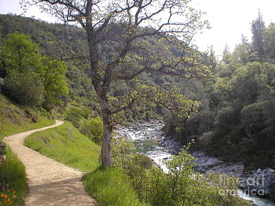 Art Print featuring the photograph South Yuba Trail by Rachel Lowry