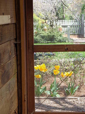 Screen Doors Photograph - Southern Afternoon by Donna  Hernandez