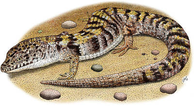 Alligator Lizards Photograph - Southern Alligator Lizard by Roger Hall