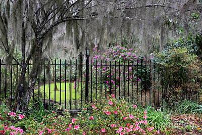 Photograph - Southern Azalea Garden by Carol Groenen