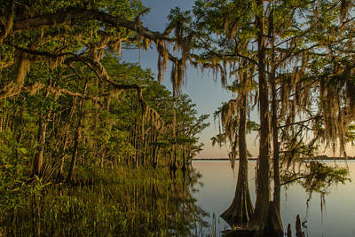 Photograph - Southern Beauty  by Julie Andel