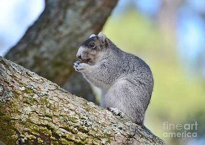Photograph - Southern Fox Squirrel by Kathy Baccari