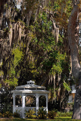 Lichen Photograph - Southern Gothic In Mount Dora Florida by Christine Till