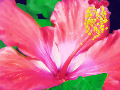 Art Print featuring the photograph Southern Hibiscus by Diane Miller