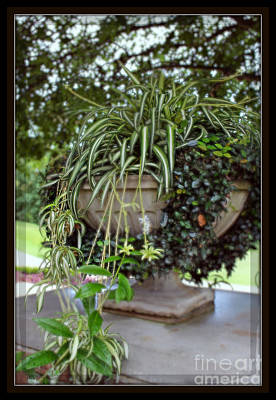 Southern Pottery Photograph - Southern Living Garden Charm  by Ella Kaye Dickey
