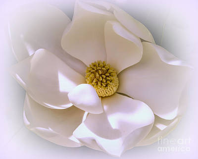 Flower Photograph - Southern Magnolia by Zina Stromberg