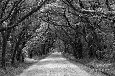 Photograph - Southern Oak Avenue In Black And White by Adam Jewell
