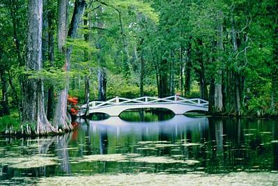 Photograph - Southern Paradise by Gary Wonning