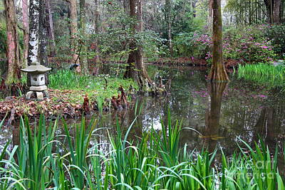 Cypress Swamp Photograph - Southern Serenity by Carol Groenen