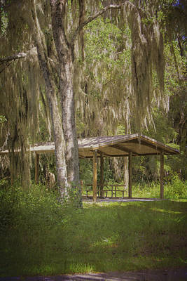 Photograph - Southern Shade by Judy Hall-Folde