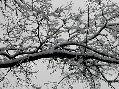 Photograph - Southern Snowfall by Diane Miller
