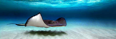 Undersea Photograph - Southern Stingray Dasyatis Americana by Panoramic Images