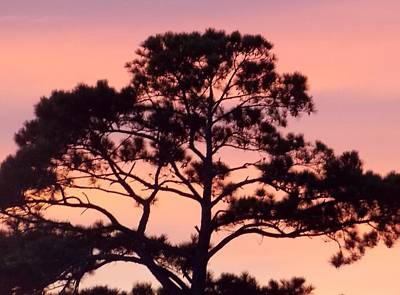 Southern Sundown Art Print by John Glass
