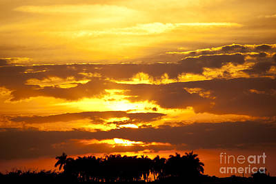 Southern Sunset Art Print by Michelle Wiarda