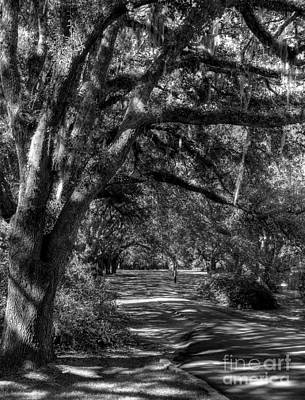 Photograph - Southern Sunshine Bw by Mel Steinhauer