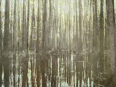 Cypress Swamp Digital Art - Southern Swamp by Brett Pfister