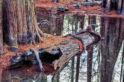 Cypress Swamp Photograph - Southern Textures by JC Findley