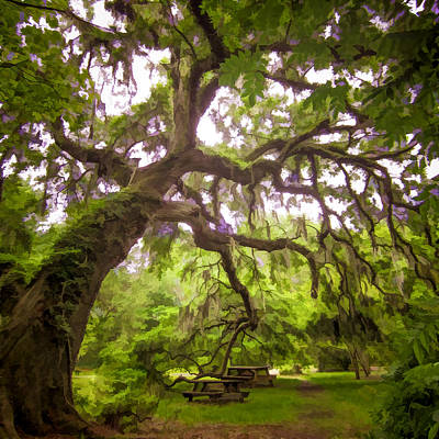 Photograph - Southern Tree by Mary Underwood