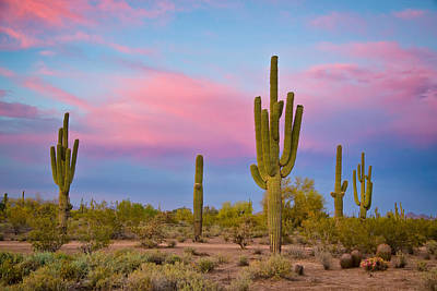 Photograph - Southwest Desert Spring by James BO Insogna
