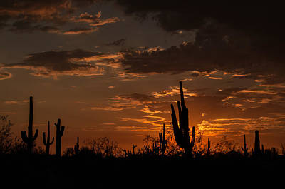 Photograph - Southwest Desert Sunset by Tam Ryan