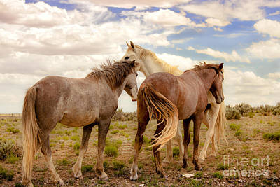 Photograph - Wild Horses With White Stallion On Navajo Indian Reservation  by Jerry Cowart