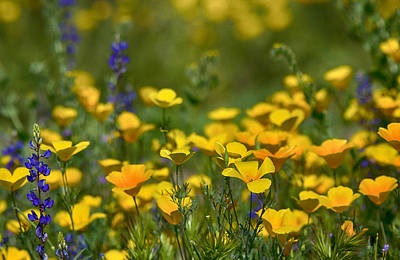 Southwest Wildflowers  Art Print by Saija  Lehtonen