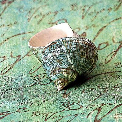 Photograph - Souvenir Shell by Karen Stephenson