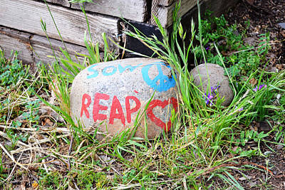 Photograph - Sow Peace Reap Love by Holly Blunkall