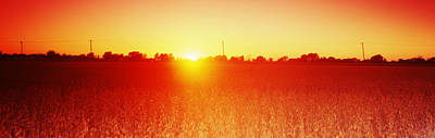 Soybean Field At Sunset, Wood County Art Print by Panoramic Images